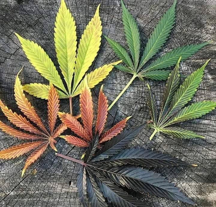 Конопля лист связать марихуана в альметьевске